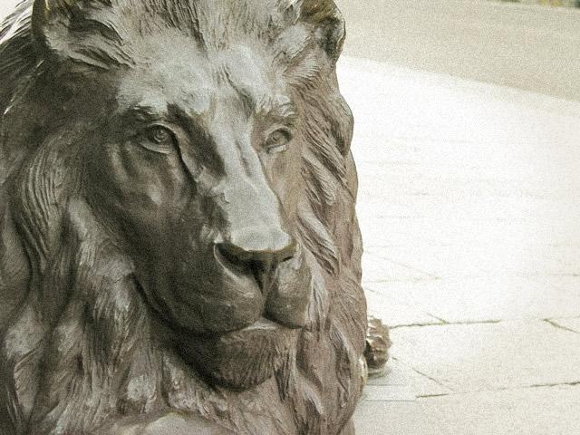 ライオンの画像 p1_29