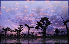 自然(風景)写真 壁紙003